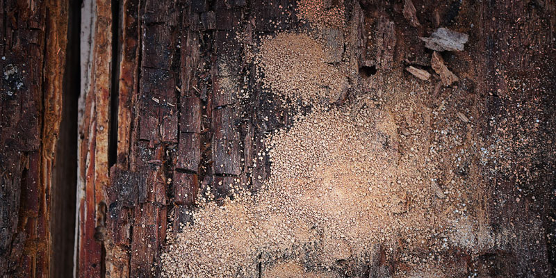 wood rot and spores